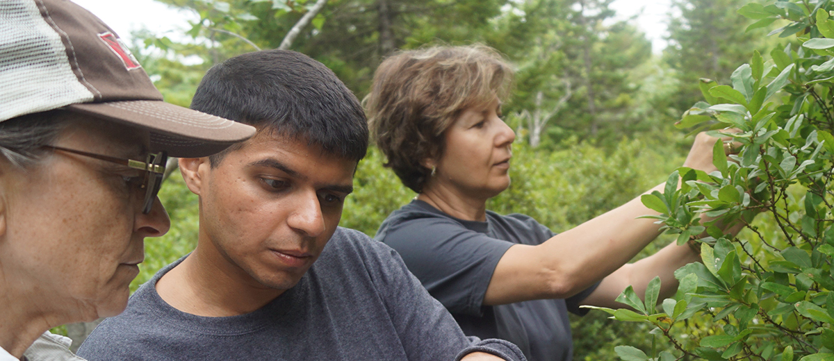 photo of researchers working on the downeast phenology trail
