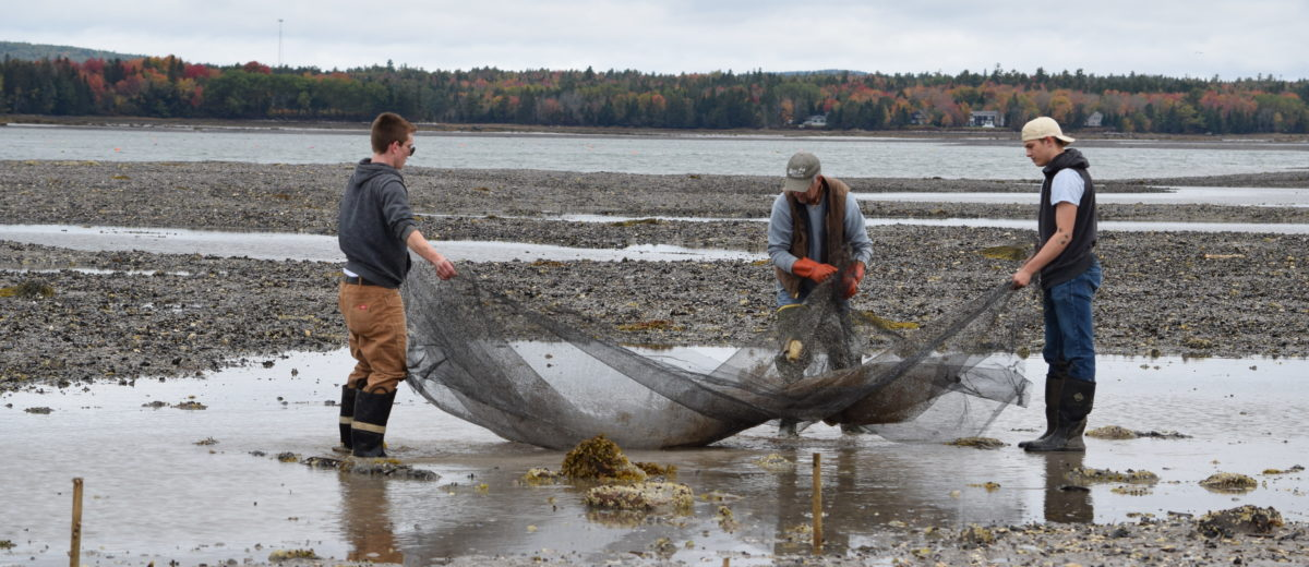 photo of three scientists working with a net on the maine coast