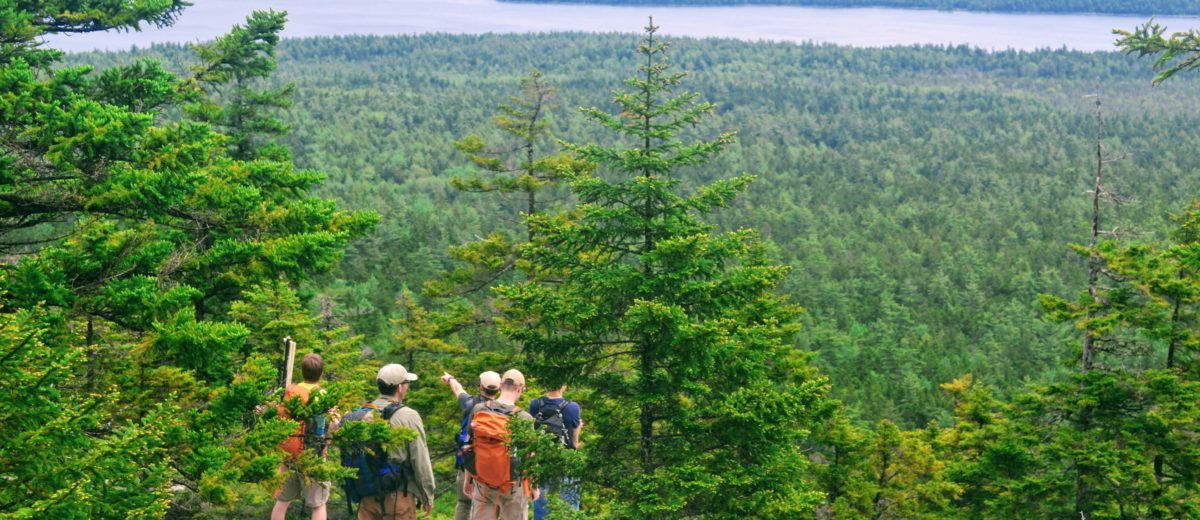 photo of five scientists on top of maine mountain looking over forest