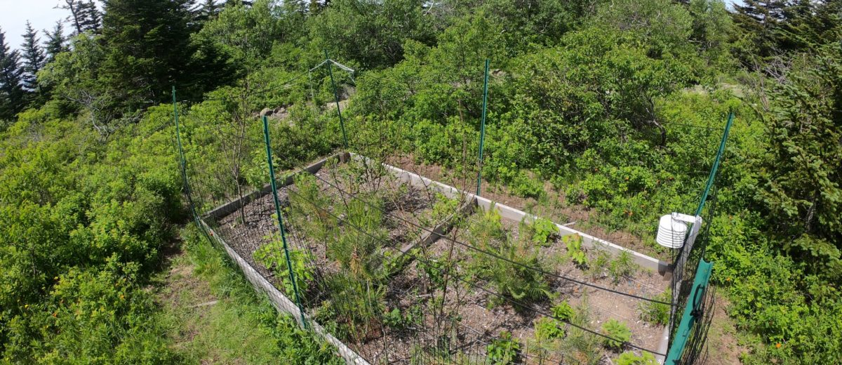 A raised and fenced bed of planted seedlings