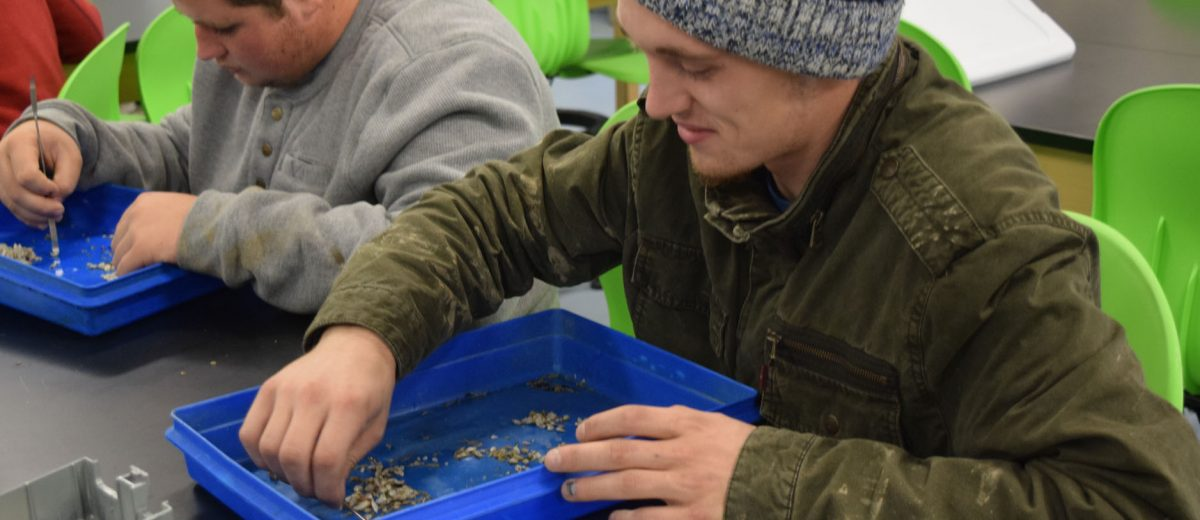 student sorts clams in blue tray at lab bench