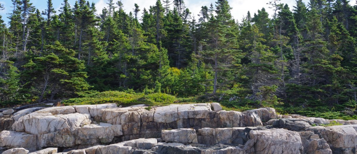 rocky shoreline with forest