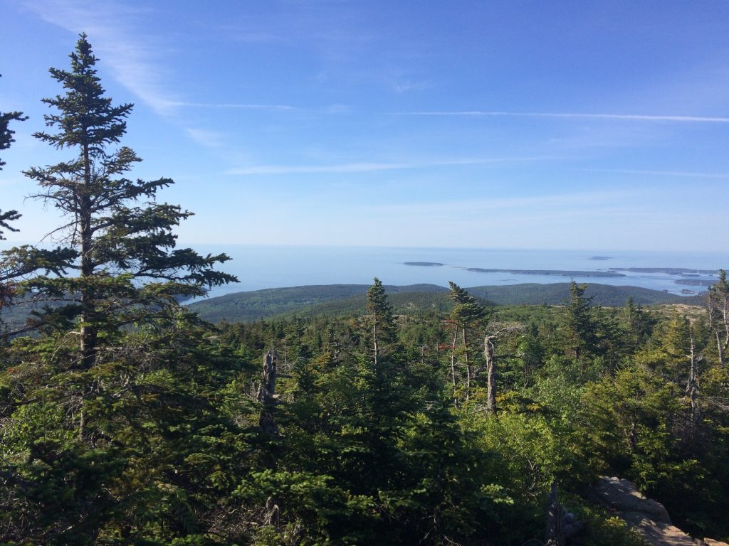 forested mountaintop with ocean in distance