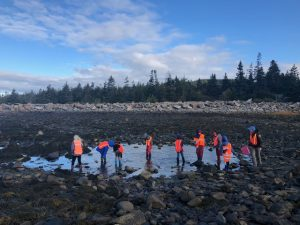 A group of eight students in the intertidal zone at low tide.