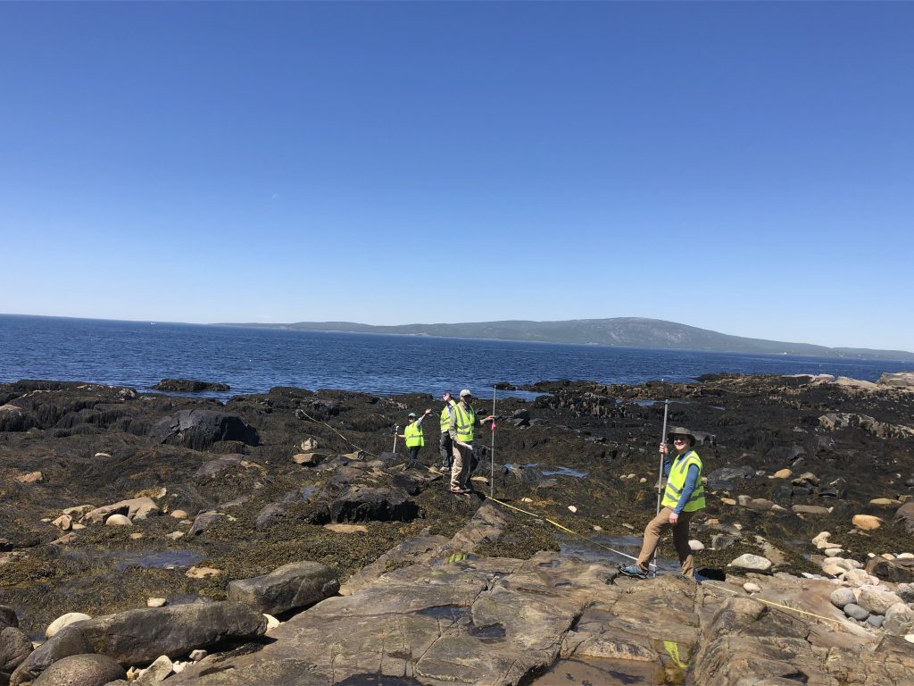 Volunteers working in seaweed-covered shoreline at low tide
