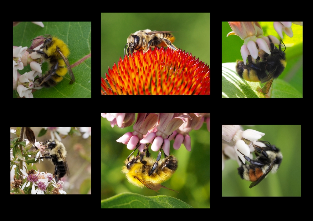 a collage of close-up images of bees on flowers