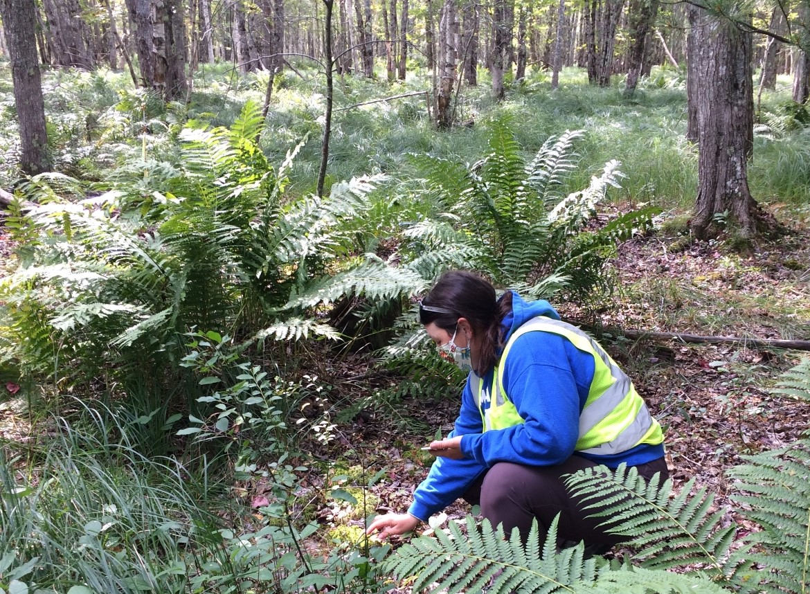 a technician looks at the ground with large ferns and trees in background