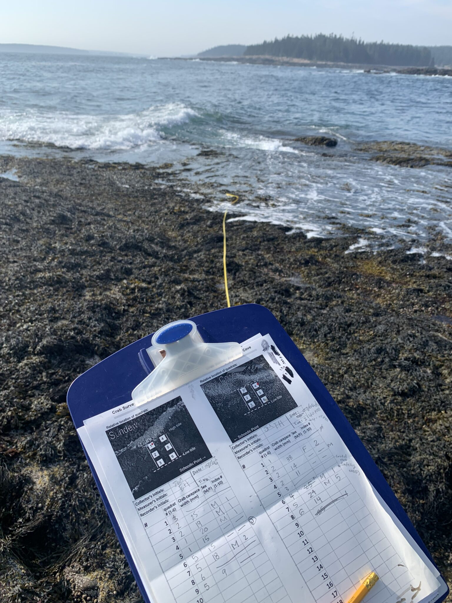 A clipboard with data sheet with rockweed-covered shoreline and ocean surf.