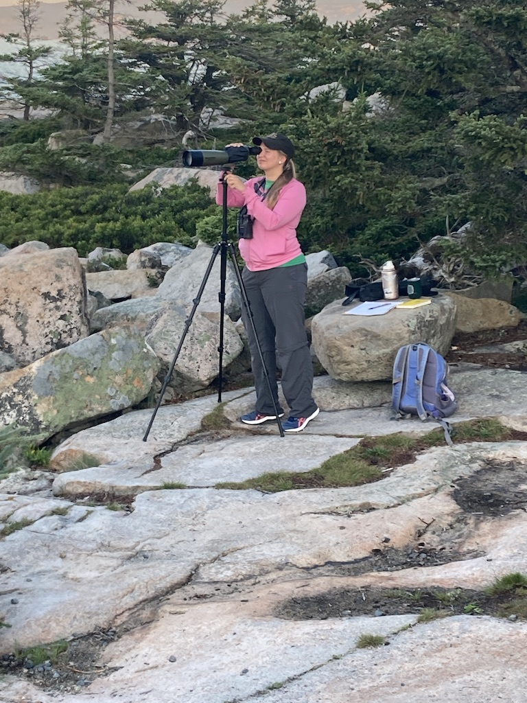 A person stands looking through a spotting scope on granite rocks with spruce trees in background.